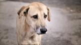 Maltrato animal: perro es usado como arma de defensa por su dueña